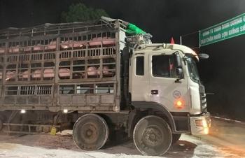 Việt Nam nhập khẩu đàn lợn giống đầu tiên từ Thái Lan