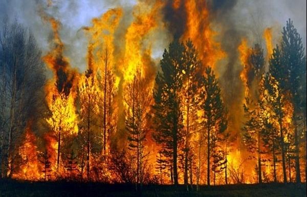 Nắng nóng kéo dài, cấp bách phòng cháy chữa cháy rừng