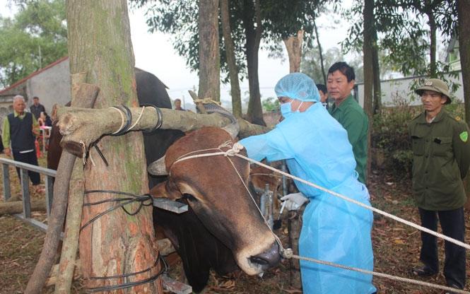 Bộ NN&PTNT yêu cầu xử nghiêm buôn bán trâu, bò nhập lậu