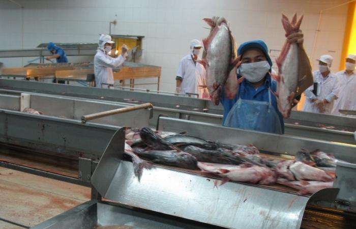 Nhiều lô cá da trơn bị Campuchia trả về, Bộ Công Thương nói gì?