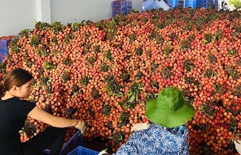 Giảm mạnh tại Trung Quốc, xuất khẩu rau quả bật tăng hầu khắp thị trường