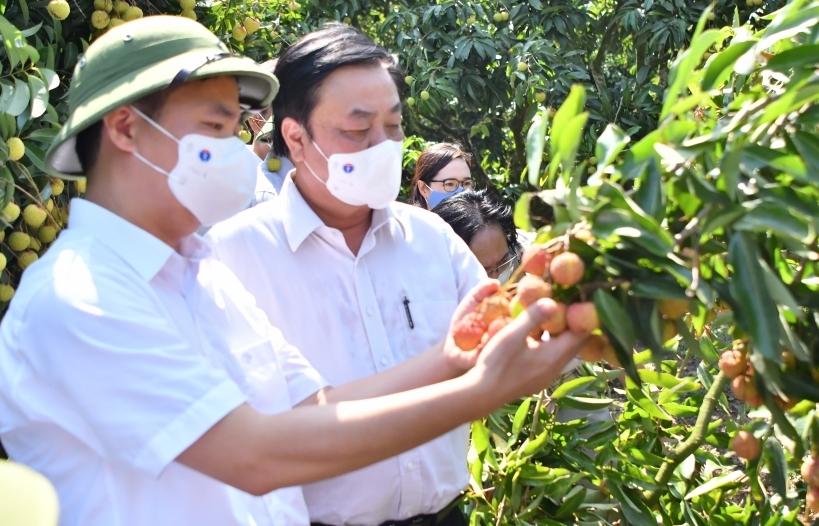 Bắc Giang tiêu thụ hơn 165.000 tấn vải thiều, đạt gần 87% tổng sản lượng