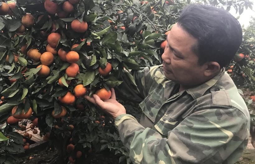 Algeria tạm ngừng nhập khẩu 13 mặt hàng trái cây