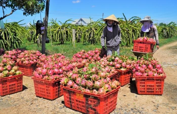 Thủ tướng yêu cầu hỗ trợ kết nối đầu ra cho nông sản đến vụ thu hoạch