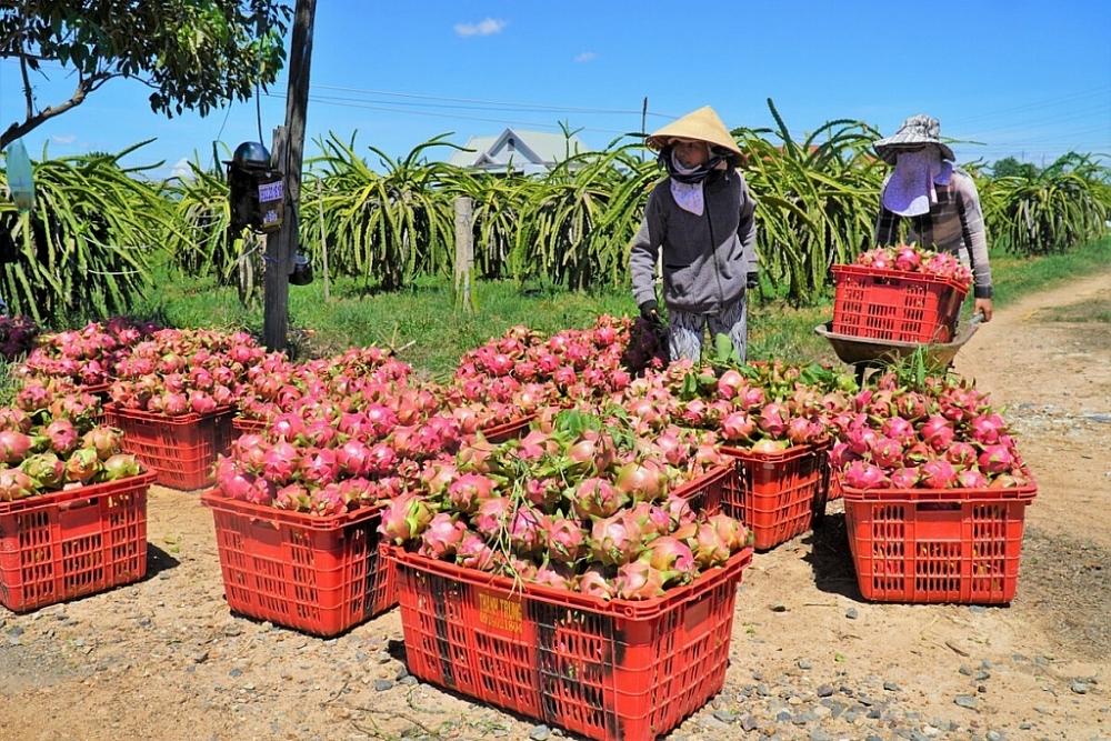 Hỗ trợ kết nối đầu ra cho nông sản đến vụ thu hoạch