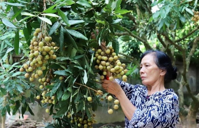 Mở tuyến vận tải hàng không trực tiếp tới Mỹ để bứt phá xuất khẩu trái cây