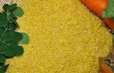 """Philippines phê duyệt thương mại """"gạo Vàng"""" biến đổi gen"""