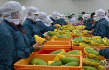 Xuất khẩu rau quả sang Trung Quốc sụt giảm