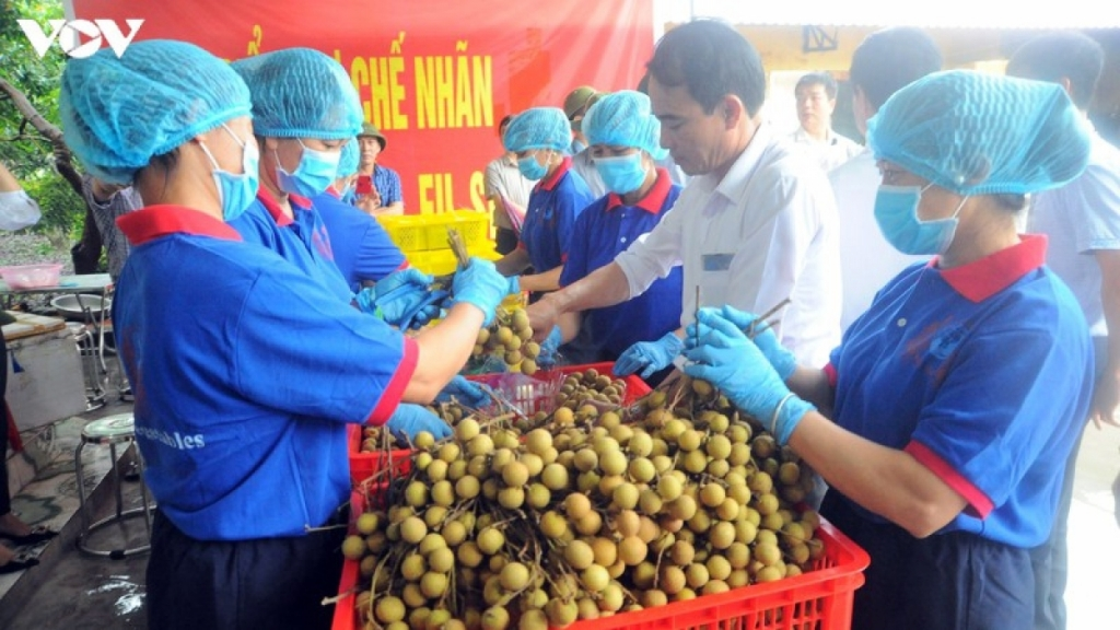 Việt Nam cần lưu ý điều gì khi Trung Quốc cấm vô thời hạn với nhãn Thái Lan?