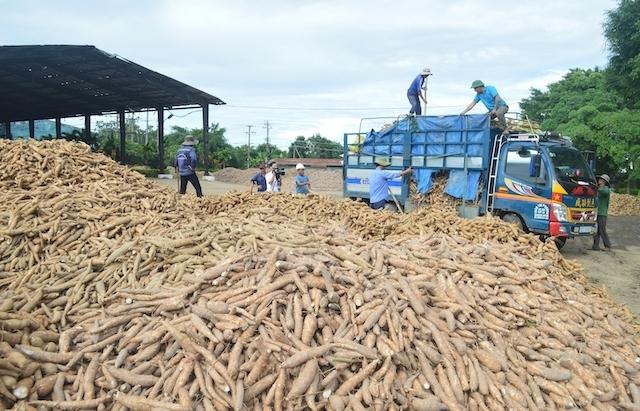 Trung Quốc giảm mạnh nhập khẩu tinh bột sắn Việt Nam, tăng nhập từ Thái Lan