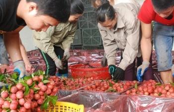 Nông, thủy sản đi Trung Quốc: Cần chấp nhận