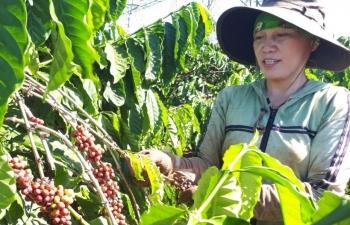 Làm gì để hiện thực hóa xuất khẩu cà phê 6 tỷ USD?