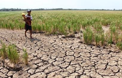 Biến đổi khí hậu là thách thức lớn nhất với sản xuất lương thực ASEAN