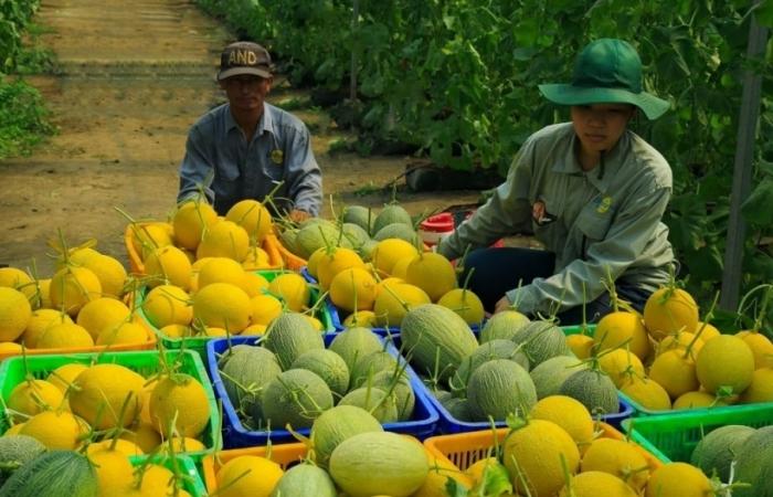 Sẵn sàng đưa 150.000 combo nông sản tới từng phường ở TPHCM mỗi ngày