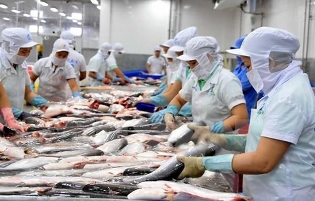 Cá tra Việt bị cạnh tranh mạnh tại EU dù chiếm thị phần áp đảo