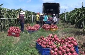 Xuất khẩu rau quả sang Trung Quốc liên tiếp giảm mạnh