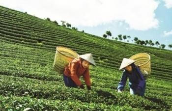 Trung Quốc muốn lập thương hiệu chè chung với Việt Nam