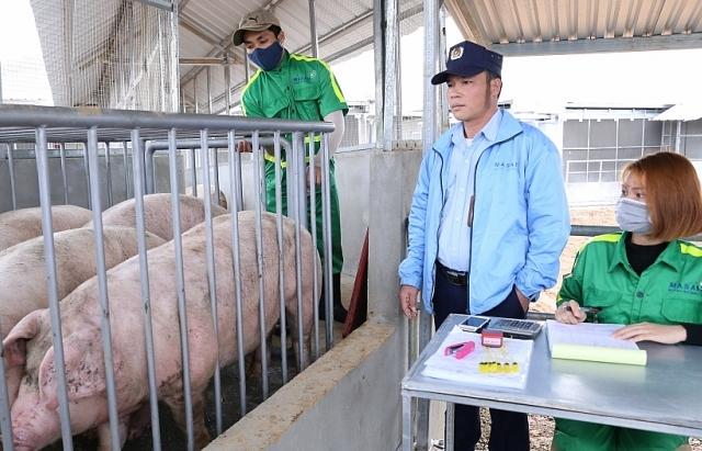 Bộ trưởng NN&PTNT : Không xuất lợn tiểu ngạch sang Trung Quốc