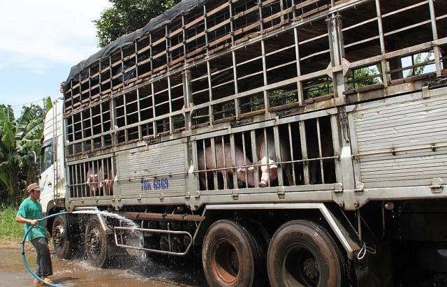 Kiểm soát chặt vận chuyển lợn, sản phẩm từ lợn qua biên giới