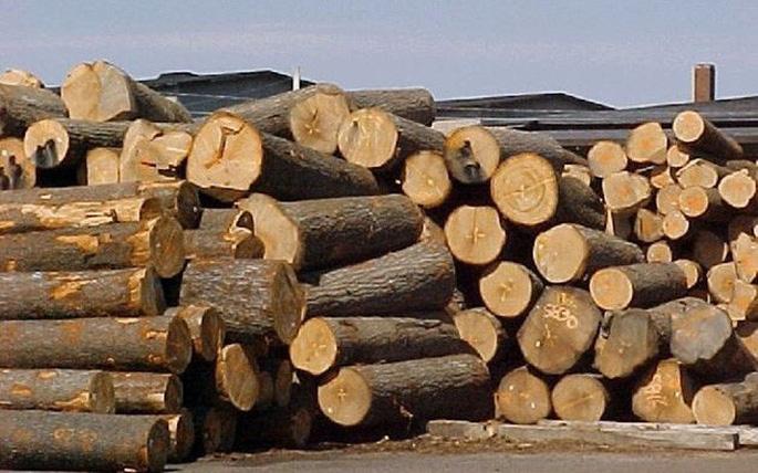Nâng cao năng lực kiểm soát gỗ nhập khẩu cho Kiểm lâm và Hải quan