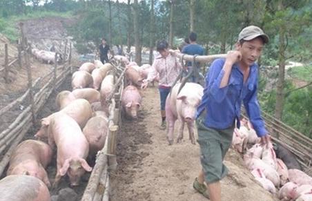 Hạ giá lợn, phải chặn