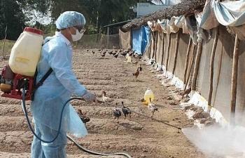 Tăng cường công tác phòng, chống bệnh Cúm gia cầm giai đoạn 2019-2025