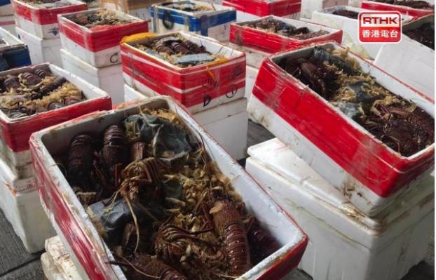 Thu giữ 3.000kg tôm hùm trong vụ buôn lậu