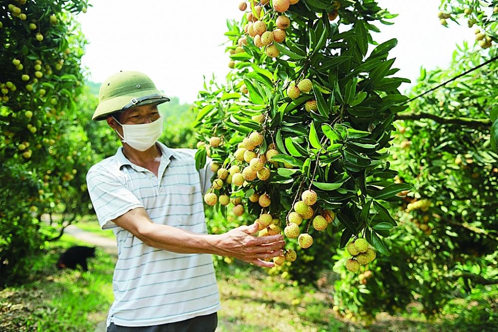 Bộ NN&PTNT đang đẩy mạnh các giải pháp, phối hợp chặt chẽ với các bộ, ngành liên quan tháo gỡ khó khăn cho hàng nông, thuỷ sản XK Ảnh: Nguyễn Thanh