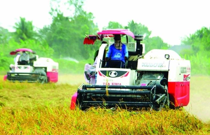 Tránh đứt gãy chuỗi sản xuất, chế biến, tiêu thụ nông sản