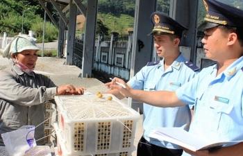 Sửa quy định về chức năng, nhiệm vụ và cơ cấu tổ chức của Tổng cục Hải quan