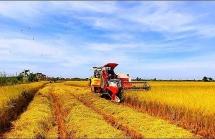 Quy định mới về hỗ trợ lãi suất vay vốn giảm tổn thất trong nông nghiệp