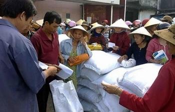 Nửa triệu người nghèo đã nhận gạo hỗ trợ của Chính phủ trước Tết