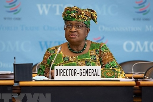 Tổng giám đốc WTO khuyến cáo về bất bình đẳng trong tiếp cận vaccine